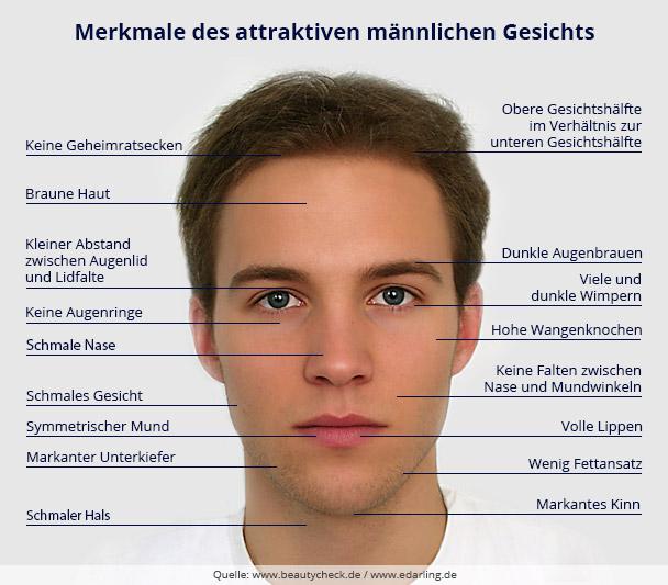 Der Aufbau eines attraktiven männlichen Gesichts